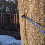 Thumbnail image for Maple Sugarin'