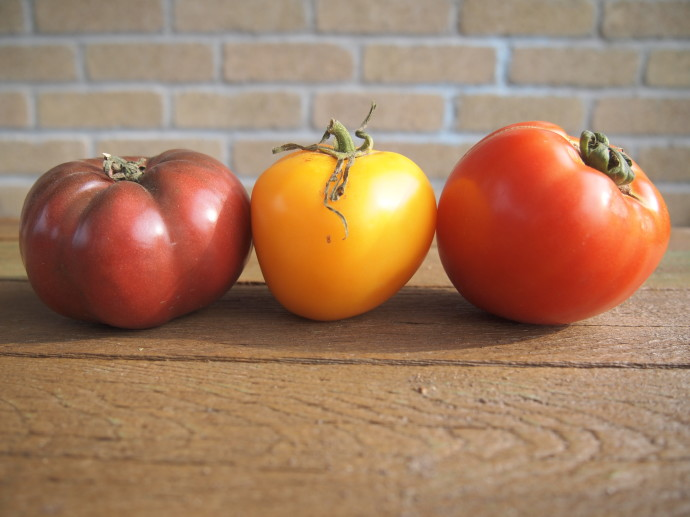 Heirloom Tomatoes from Common Ground Farm